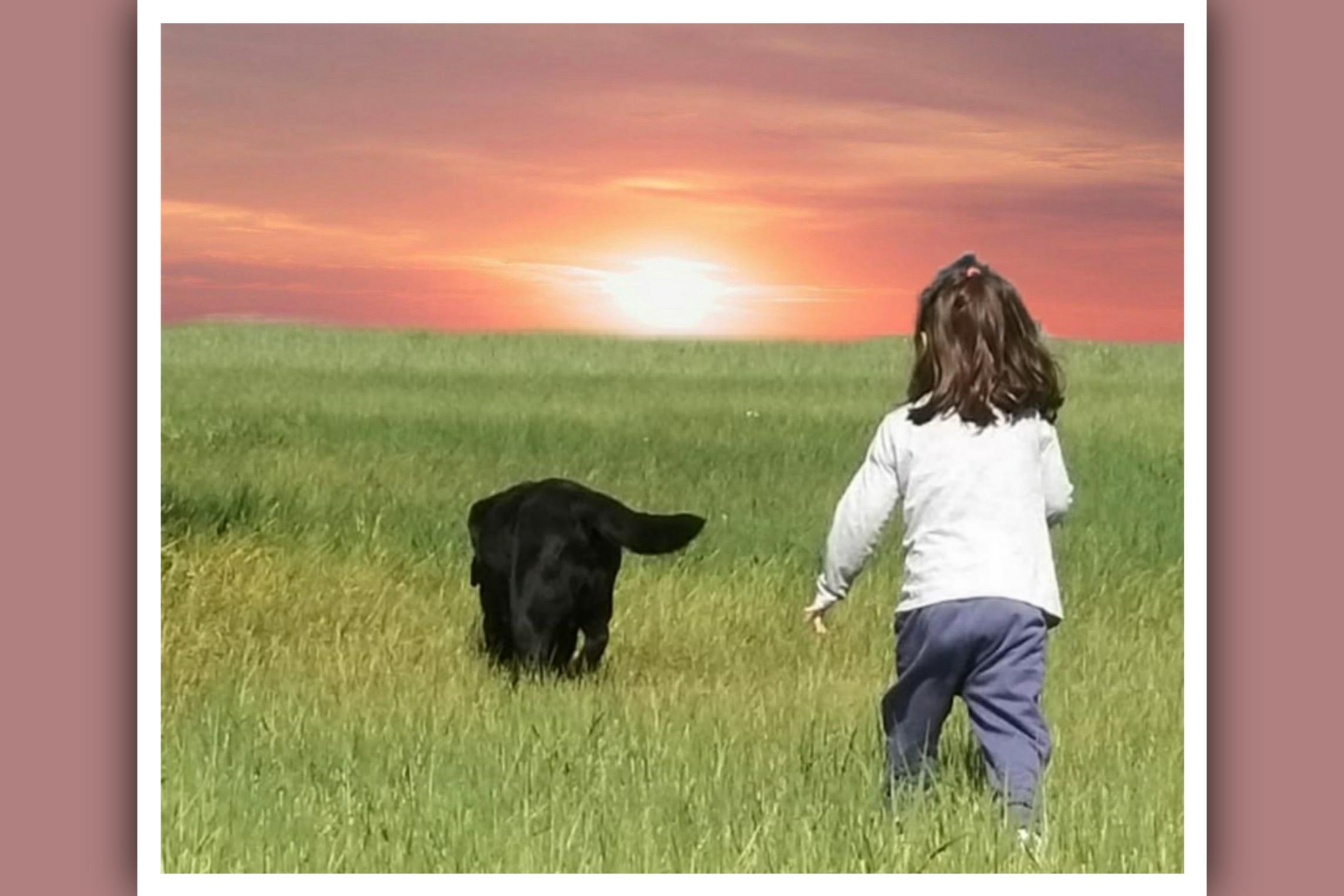 niña y perro andando por el campo al atardecer